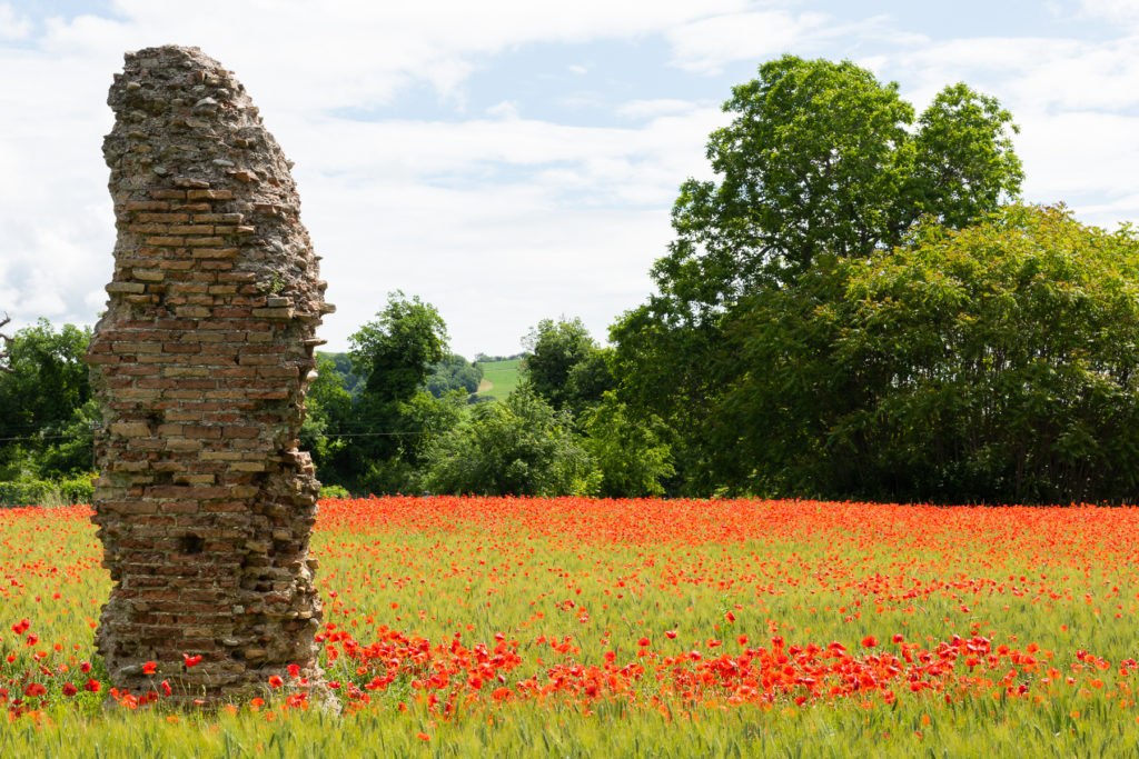 Poppy field in Le Marche, Italy.  Things to do in Le Marche in Spring