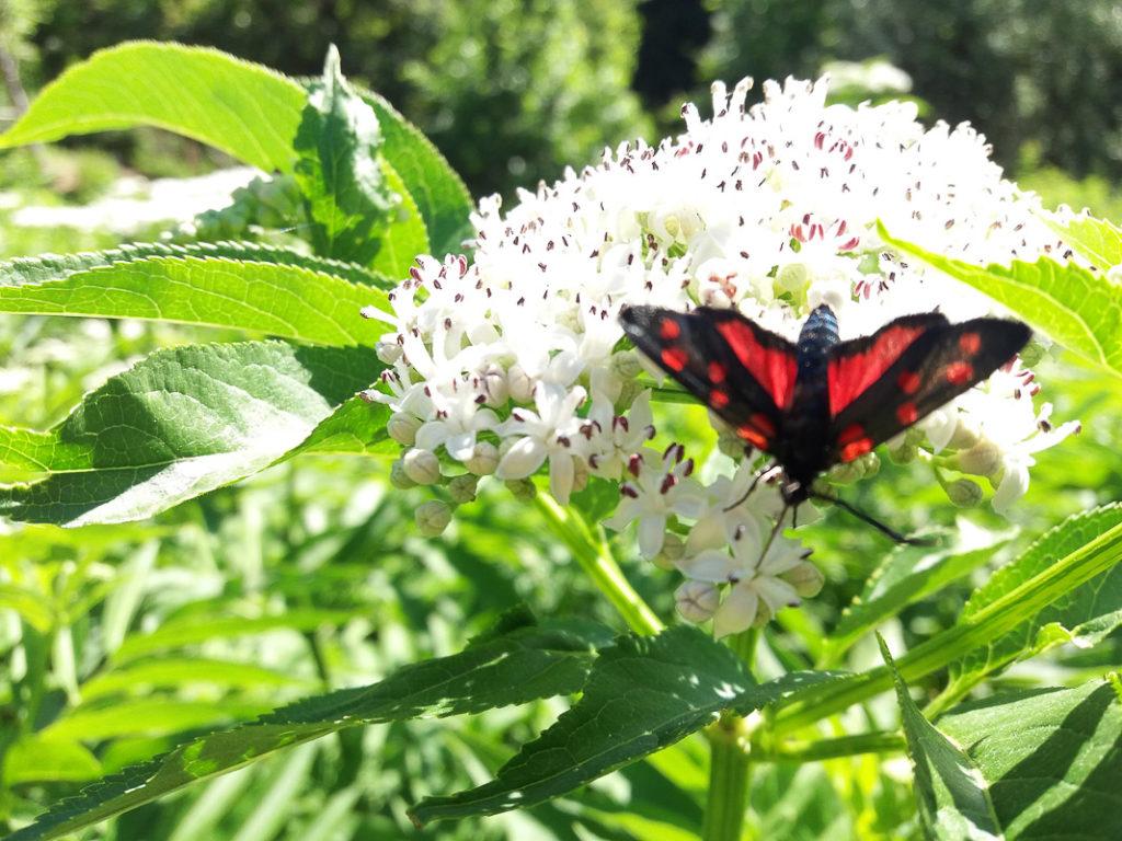 The Butterfly Garden of Cessapalombo